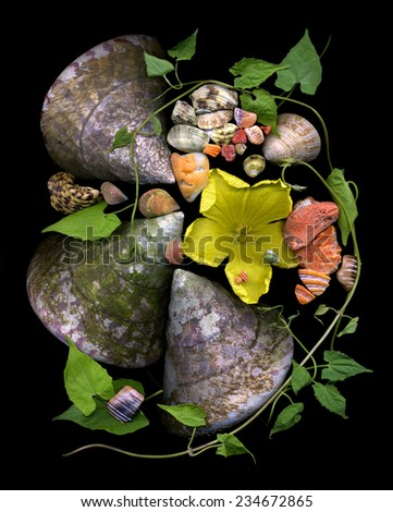 Beautiful composition made from big tropical shells, big yellow flower, elements of corals and leaves. - stock photo