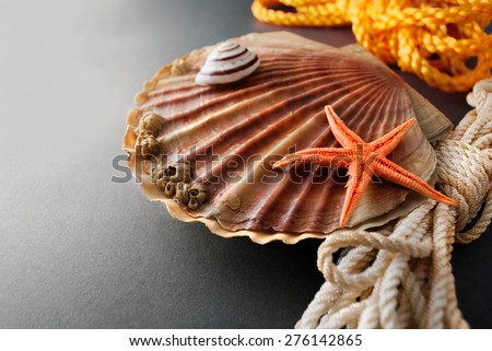 Beautiful composition of big scallop and few marine items on a gray background. - stock photo