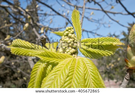Beautiful cones on a spruce branch - stock photo