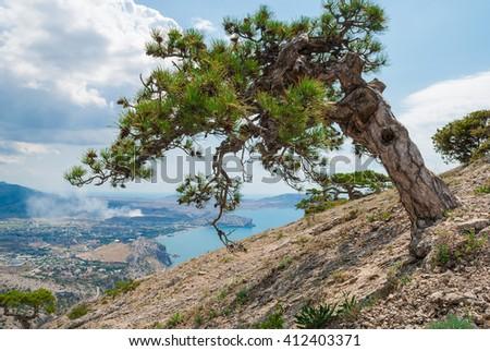Beautiful conifer tree on mountainside. Warm sea landscape - stock photo
