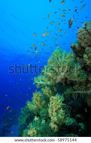 Beautiful coral and fish - stock photo