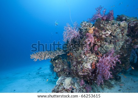 Beautiful Coral block in the Andaman Sea Thailand with colorful hard and soft corals and fish surrounding  it! - stock photo