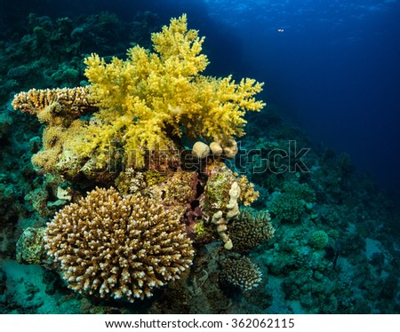 Beautiful coral garden in Red Sea - stock photo