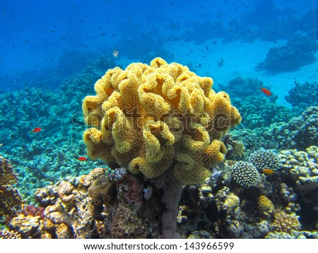 Beautiful coral in red sea - stock photo