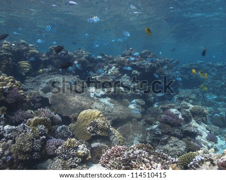 Beautiful coral reef at the Red Sea, Marsa Alam with a lots of coral fishes - stock photo