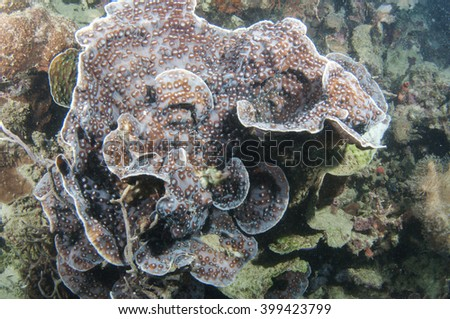 Beautiful Coral reef -Philippines - stock photo