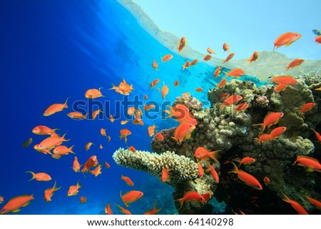 Beautiful Coral Reef with Lyretail Anthias fish - stock photo