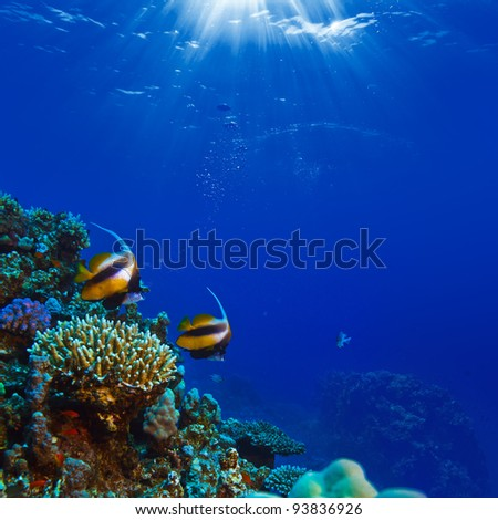 beautiful coral reef with sunrays through water surface and yellow fish - stock photo
