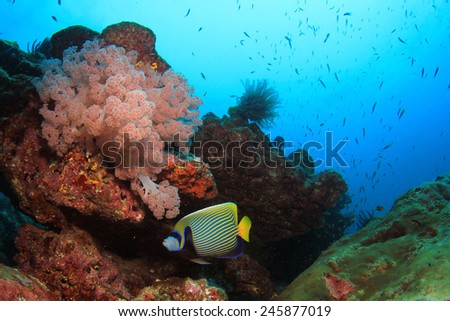 Beautiful coral reef with tropical fish underwater in ocean - stock photo