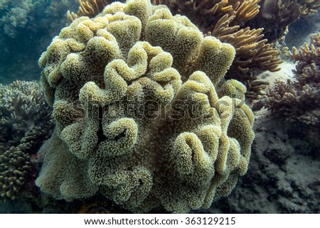 Beautiful coral reefs in a slightly murky tropical saltwater ocean - stock photo