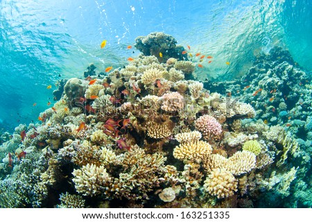 beautiful corals in the sea - stock photo