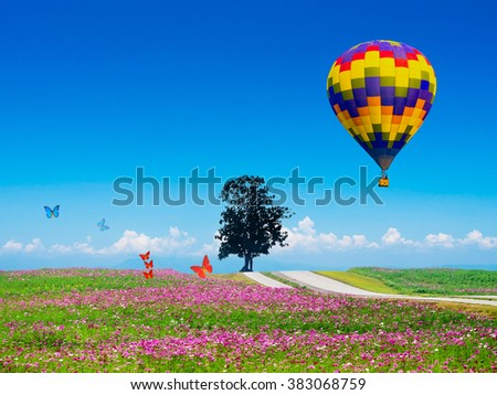 beautiful cosmos flower field with the road cross through the hill with balloon on the sky