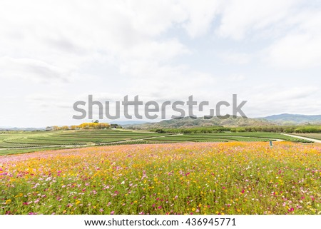 Beautiful Cosmos Flower in park and blue sky - stock photo