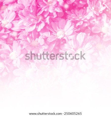 beautiful cosmos flowers in sun blure and light rays with colored filters/spring or summer background - stock photo