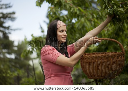 Beautiful country girl with a basket reaching for some fruit - stock photo
