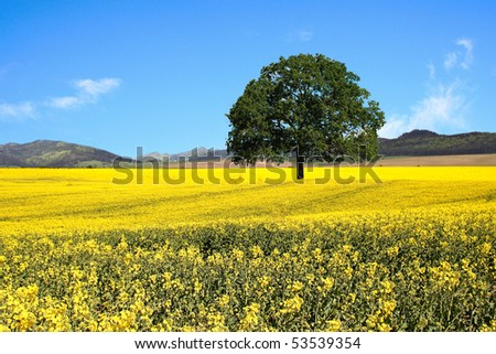 Beautiful country landscape - stock photo