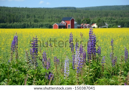 Beautiful countryside in Sweden