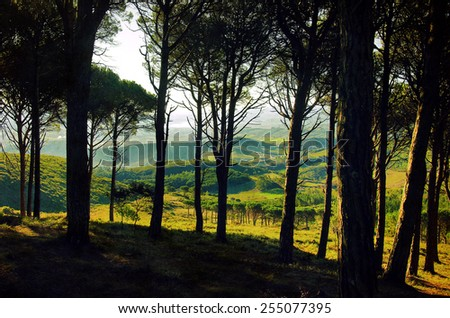 Beautiful countryside landscape with green hills and trees - stock photo