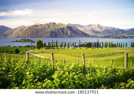 Beautiful Countryside Meadow in New Zealand - stock photo