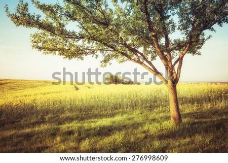 Beautiful countryside view - stock photo