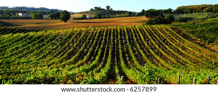 Beautiful countryside vineyard panorama north of Rome in Italy - stock photo