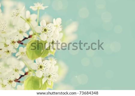 Beautiful crab apple tree blossoms against a blue background. - stock photo