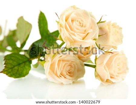 Beautiful creamy roses close-up isolated on white
