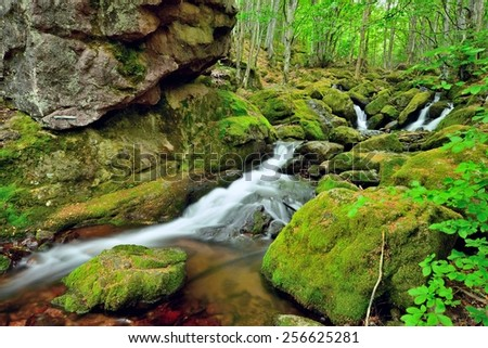 Beautiful creek and covered with moss rocks at fairy tale forest after rain. - stock photo