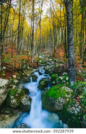 Beautiful creek in colorful autumnal forest flowing into the Mosnica river Slovenia, Europe. Triglav national park. - stock photo