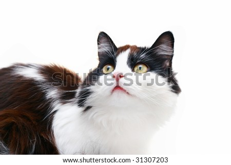 beautiful curious cat isolated on white - stock photo