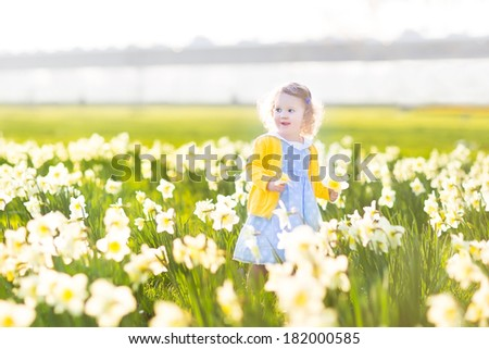 Beautiful curly toddler girl in a blue dress playing in a field of yellow daffodil flowers on a sunny summer evening - stock photo