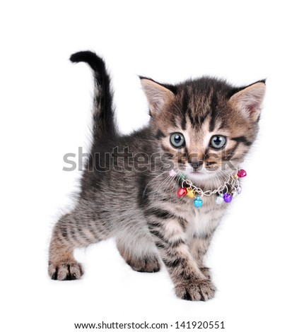 beautiful cute one month old kitten with jingle bells necklace walking - stock photo