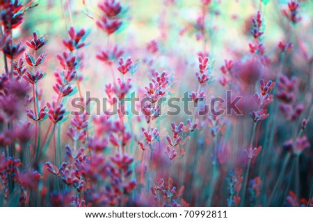 Beautiful 3D anaglyph stereo image of a lavender field. Great agriculture, SPA, medical concept for diverse advertising materials. To view this image you need glasses with cyan and red colors.