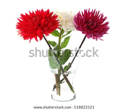 Beautiful dahlia flowers in vase, isolated on white
