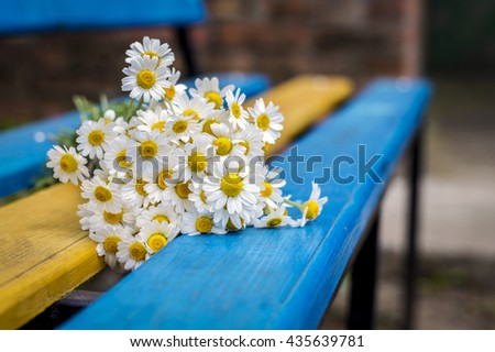 Beautiful daisies on the bench - stock photo