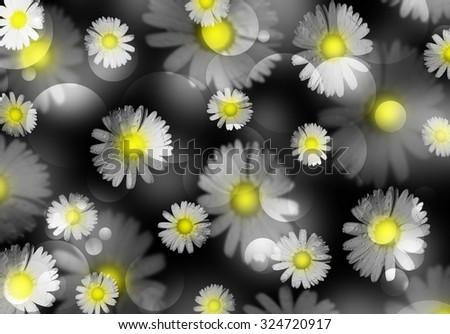 Beautiful daisies yellow center black white stock illustration beautiful daisies with a yellow center black and white flowers concept with bright detail mightylinksfo