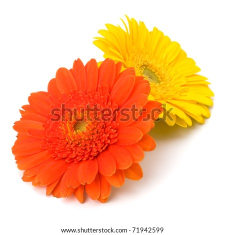 Beautiful daisy gerbera flowers isolated on white background - stock photo