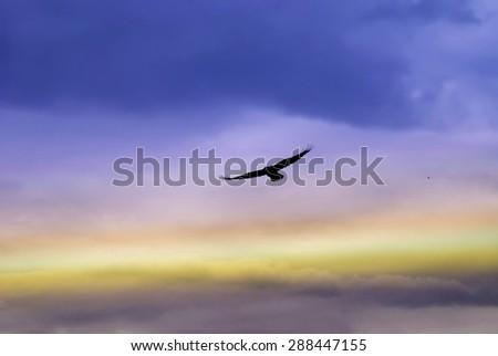 Beautiful dark eagle in the sky, vibrant colors - stock photo