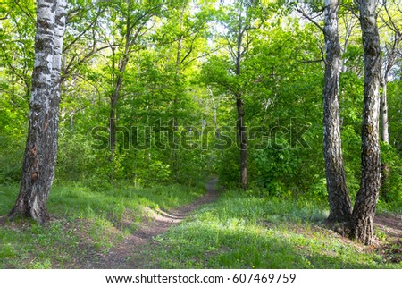 Beautiful deciduous forest in spring in May