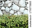 beautiful decorative plant on the stone wall  - stock photo