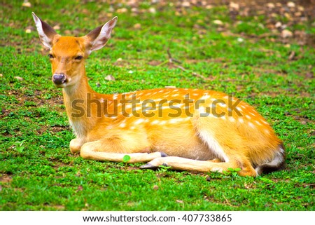 beautiful deer in the park. - stock photo