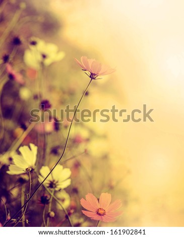 Beautiful defocus blur retro background with tender flowers. Floral art design in retro style