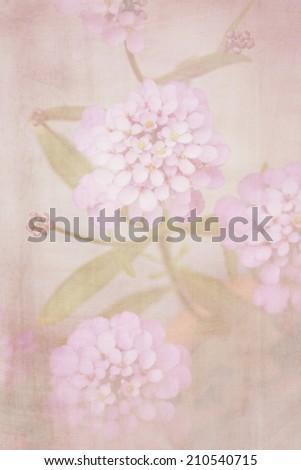 Beautiful defocus blur retro background with tender soft flowers. Floral textured artistric design. - stock photo