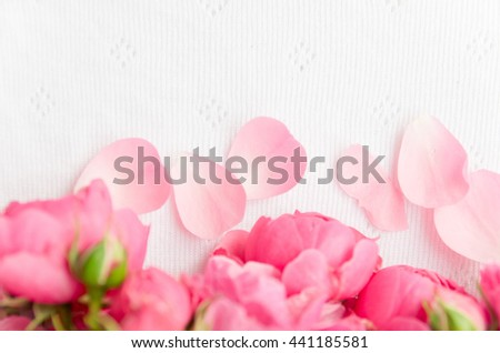 Beautiful, delicate, pink roses and rose petals on a light background, a beautiful background for cards, place for text - stock photo