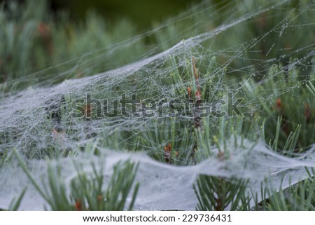 Beautiful delicate spider web with water droplets from early morning dew or rain glistening on the silk threads suspended from the leaves of a tree in a garden or park - stock photo