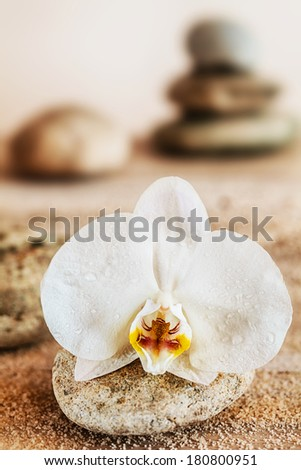 Beautiful delicate white orchid on a seashore on a round waterworn pebble conceptual of wellbeing, a spa, treatment, relaxation and nature - stock photo