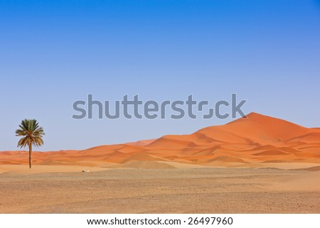Beautiful Desert Landscape. Sahara, Morocco. - stock photo
