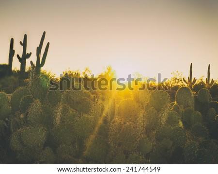 Beautiful desert morning sunrise - stock photo