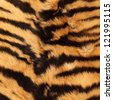 beautiful detail of black stripes on a tiger pelt ( real ) - stock photo