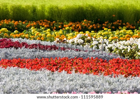 Beautiful differently colored flowers in the park - stock photo